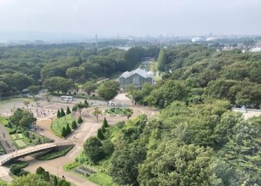 麻溝公園・樹林広場