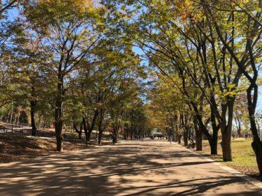 鶴間公園(水道みち)の風景