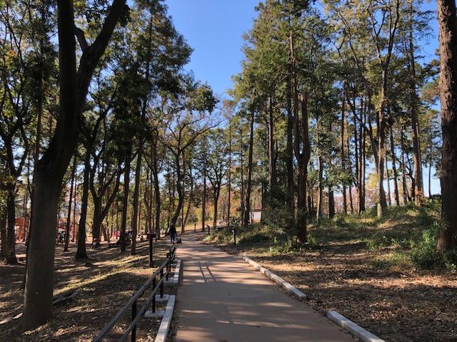 鶴間公園・つるまの森