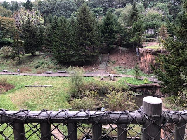 ズーラシア 亜寒帯の森 アラースの谷