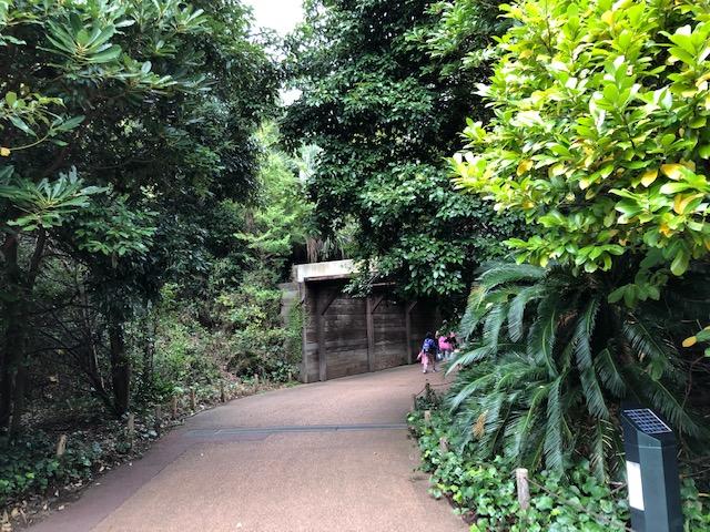 アマゾンの密林・通路