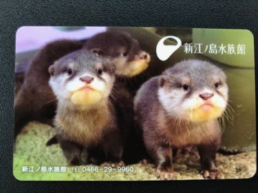 新江ノ島水族館・年間パスポート