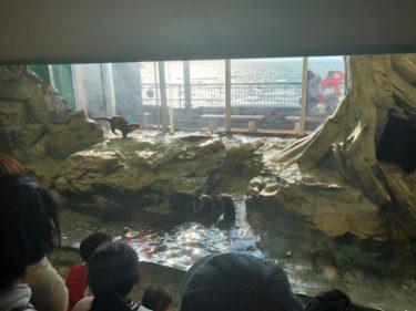 新江ノ島水族館・カワウソ