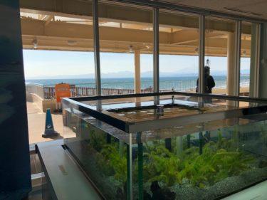 新江ノ島水族館・なぎさの体験学習館