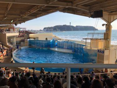 新江ノ島水族館・ドルフィンショー 開演前風景