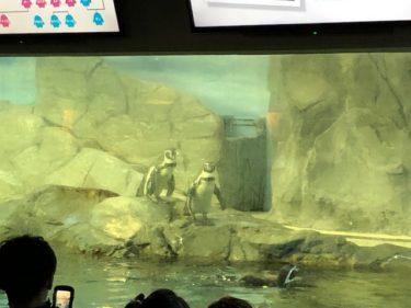 新江ノ島水族館・ペンギン
