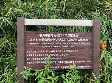子供自然公園・ゲンジボタル