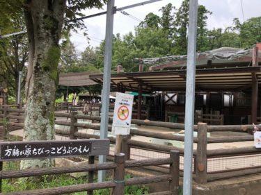 子供自然公園・万騎が原ちびっこ動物園1