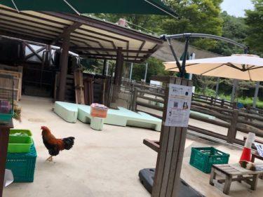 子供自然公園・万騎が原ちびっこ動物園4