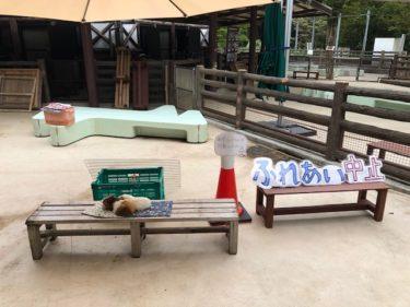 子供自然公園・万騎が原ちびっこ動物園3