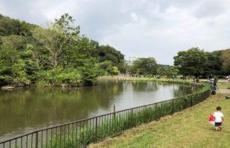 子供自然公園・中池