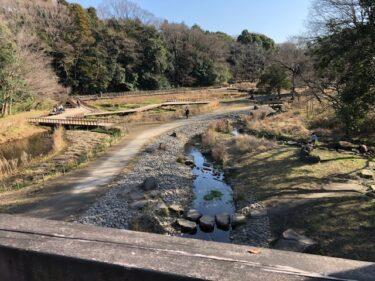 泉の森・湿性植物園
