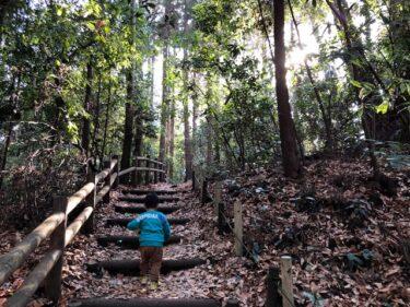 泉の森・樹林地1