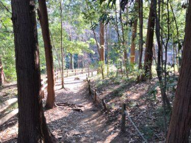 泉の森・樹林地4