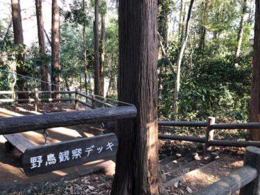 泉の森・野鳥観察デッキ