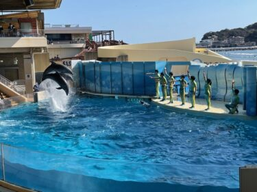 新江ノ島水族館・ドルフィンショー202103