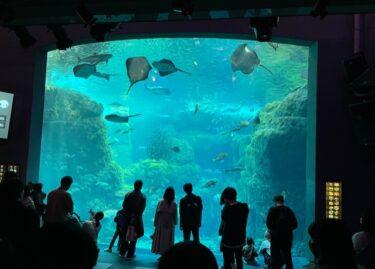新江ノ島水族館・相模湾大水槽202103