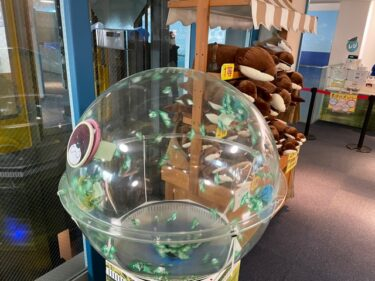 新江ノ島水族館・オッターショップ202103