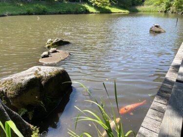 四季の森公園・はす池4