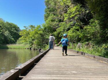 四季の森公園・はす池2