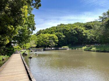 四季の森公園・はす池3