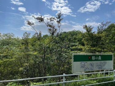 こどもの国・椿の森4