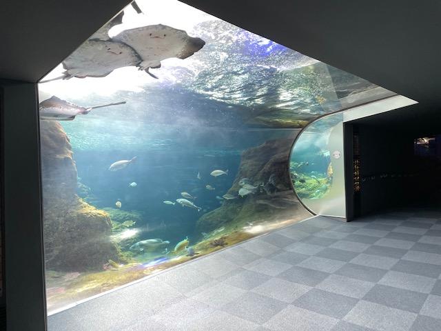 新江ノ島水族館・相模湾大水槽(2階)202105
