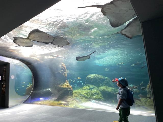 新江ノ島水族館・相模湾大水槽1
