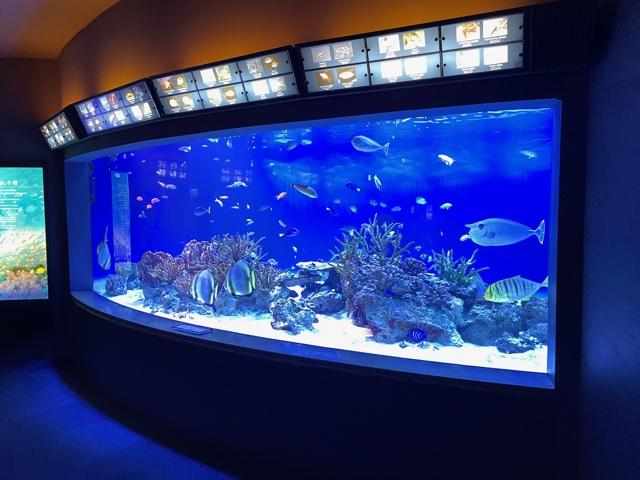 新江ノ島水族館・太平洋